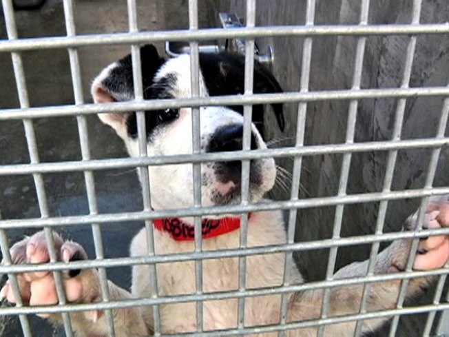 Pa. SPCA is Free Game: Court