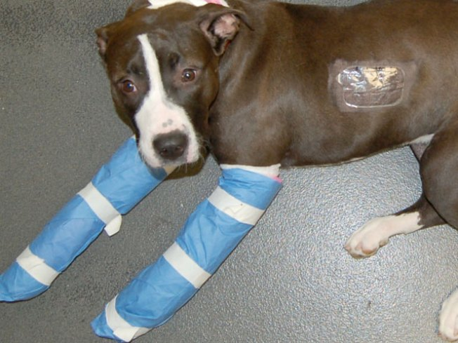 Miracle Pup Survives 6-Story Fall
