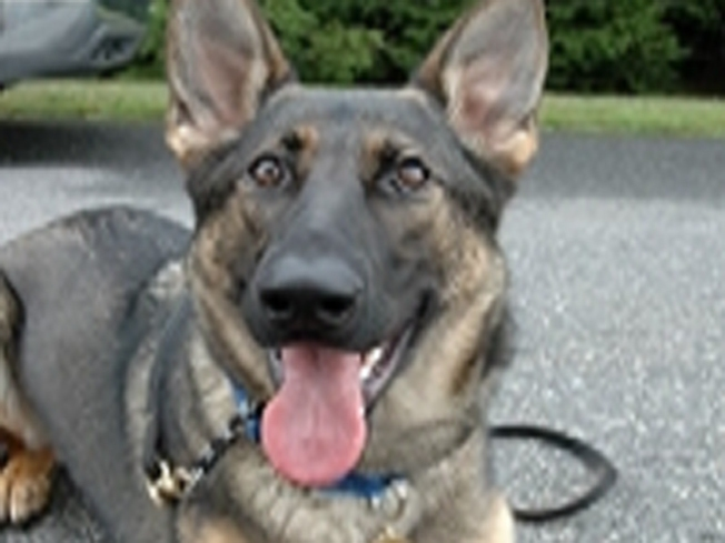 Police Dog Needs Your Help