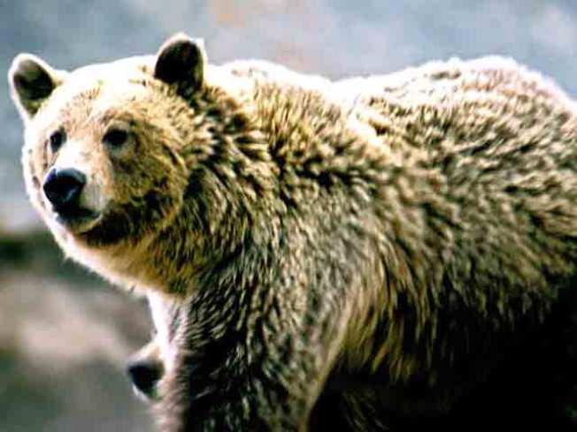 Man Survives Bear Attack by Shoving Arm Down Animal's Throat