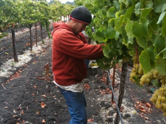 Wine Country Wary of the Wet