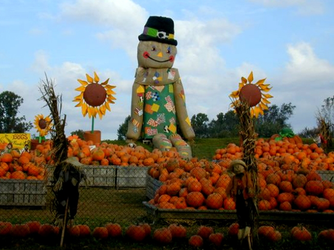 Fall Into Fall at Linvilla