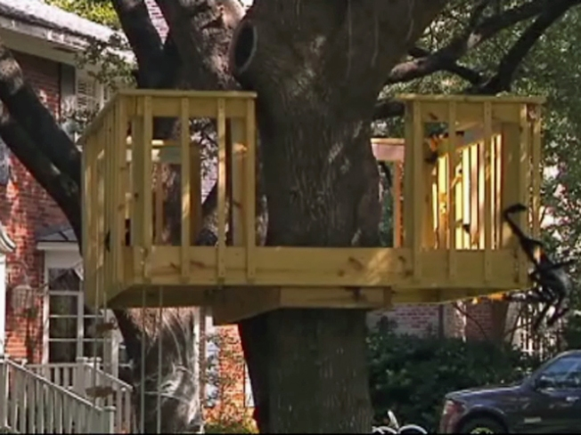 Town Tells Man to Tear Down Daughter's Birthday Tree House