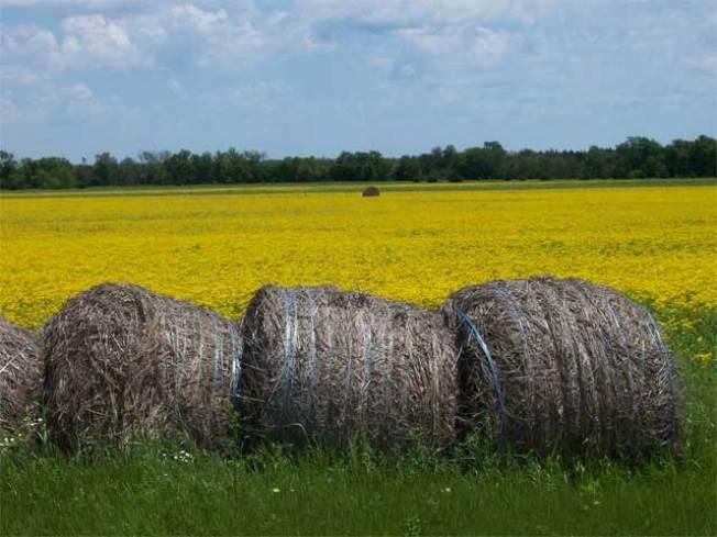 Pa. Man Dies Unloading Hay