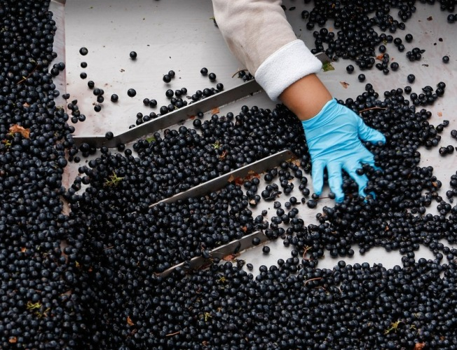 Grapes Every Day May Keep Doctor Away