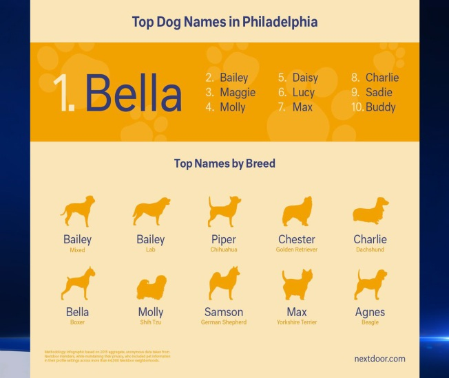 What Are The Top Dog Names In Philly Nbc 10 Philadelphia