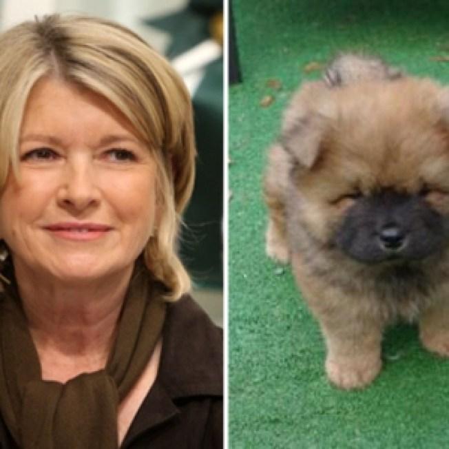 Martha Stewart's Dog Killed In Sudden Propane Explosion