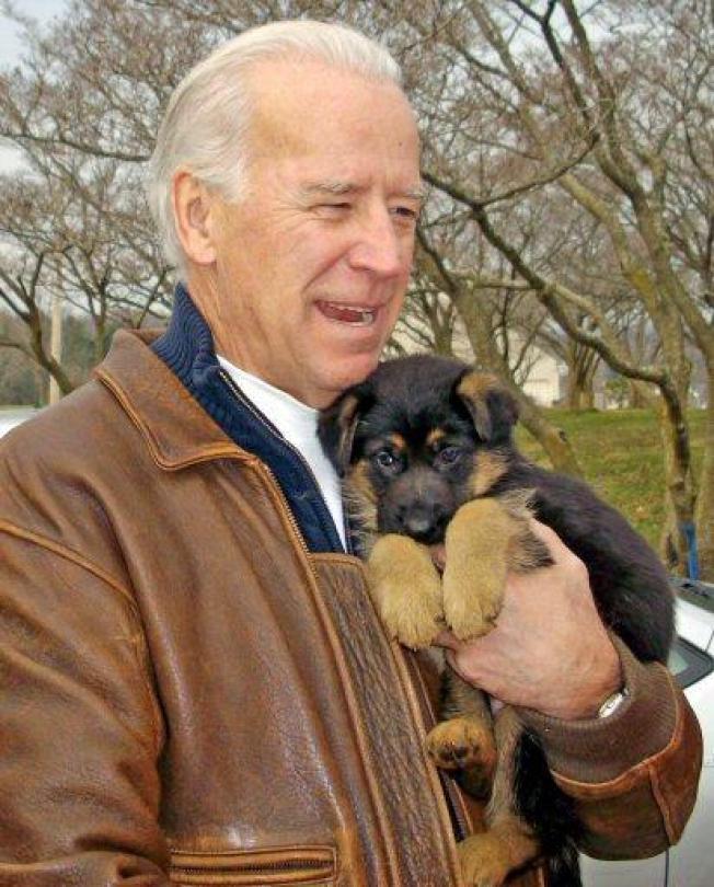 Biden Gets a Puppy, Kennel Gets Citations