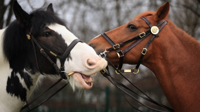 Donations to Cover Stables for Police Horses