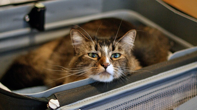 Stowaway Cat Survives Plane Ride in Suitcase
