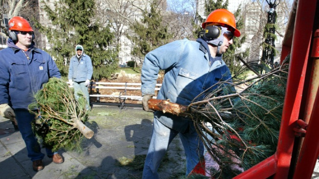 Philadelphia Christmas Tree Disposal