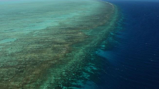 Dive Ship Leaves Snorkeler Stranded 30 Miles Offshore