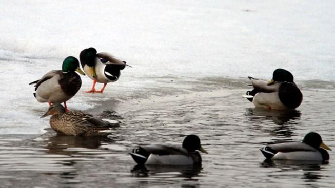 Alaska Man Runs onto Frozen Lake to Avoid Jail