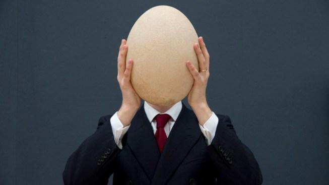 Huge Elephant Bird Egg Sold For $101,813 in U.K. Auction