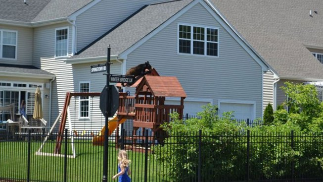 Black Bear Climbs Backyard Playground