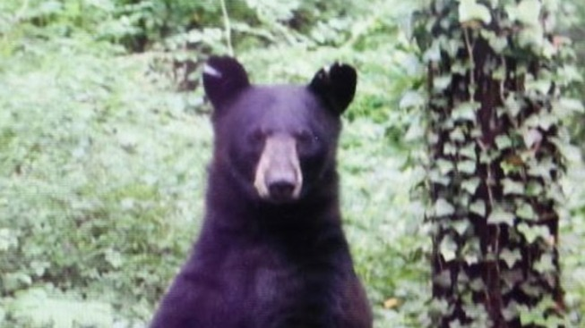 Black Bear Spotted on Princeton University Campus