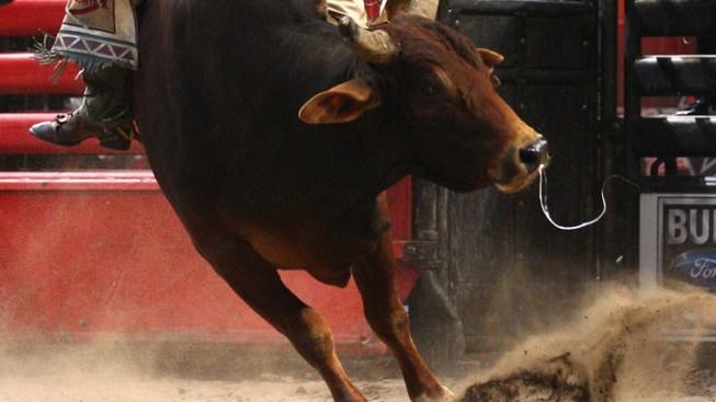 Teen Bull Rider Hurt