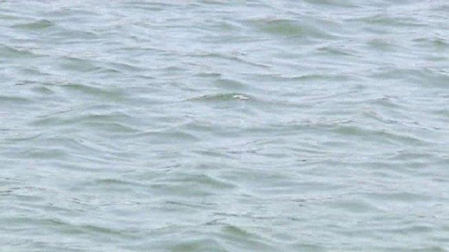 Dead Whale Floating in Delaware River