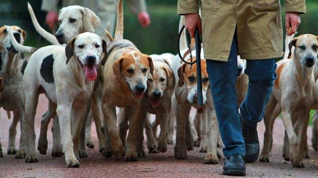 Women Sue Over Lost Dog Semen