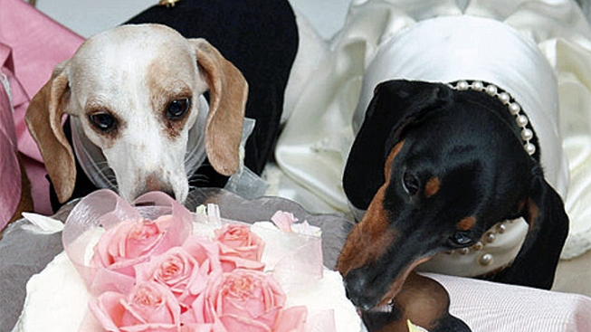 Pooch Wedding to Pronounce Puppy Love