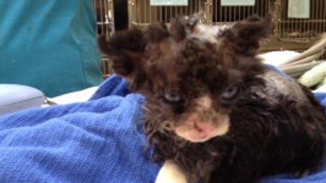 $5,000 Reward in Kitten Set on Fire Case