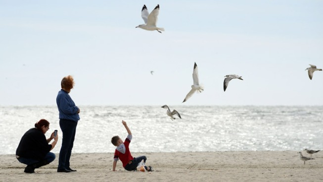 NJ Rebuilding Bayside Beaches Crucial to Birds