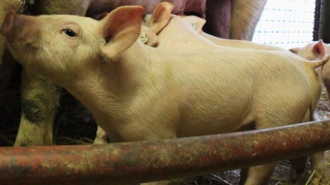 Animal Advocacy Group Wants UPenn's Vet School Fined