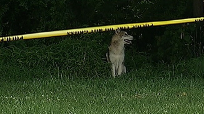 Hot Dogs Key in Pennypack Wolf-Dog Capture