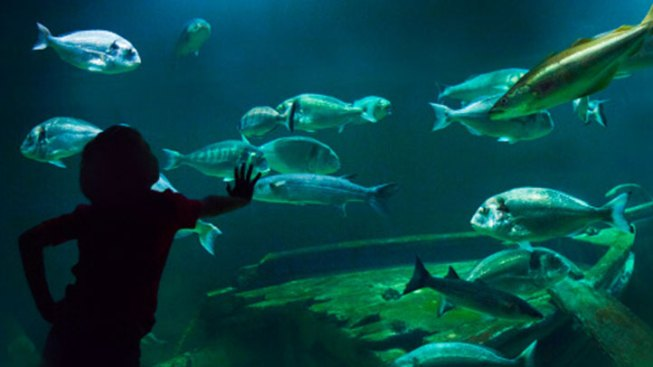 Spotlight! Adventure Aquarium Kid Zone
