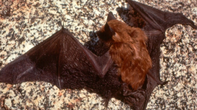 More Bugs as Bucks Co. Bats Die Off?
