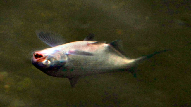 Cold Water Blamed for NJ Fish Kill