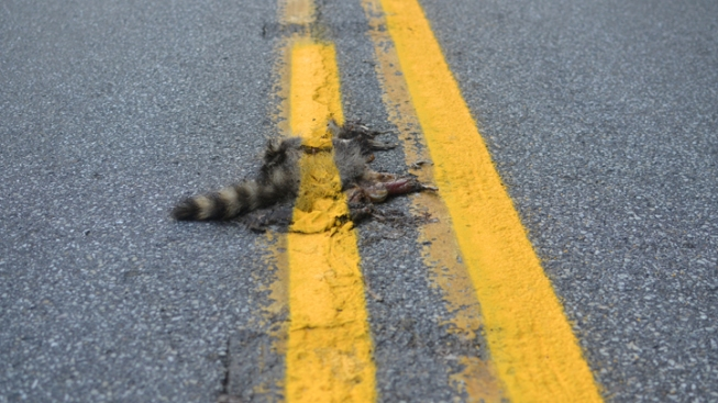 Road Crew Paints Over Road Kill