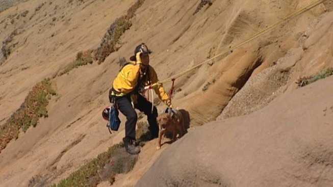 Dog Rescued From Beach Cliff in San Francisco