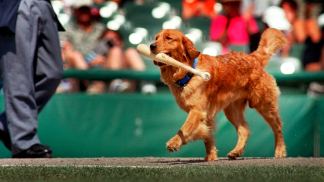 Minor League Team Pays Tribute to Beloved Bat-Dog