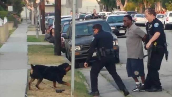 Man Whose Rottweiler Was Shot By Police Sues LA City