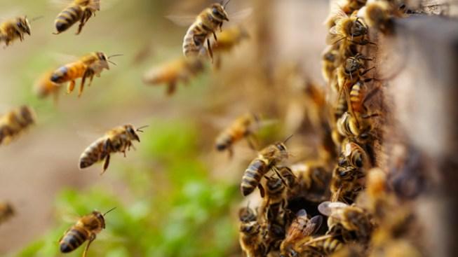 Honeybees Took a Beating During Brutal Winter