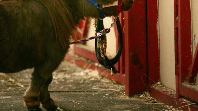 Mini Pony Named John Wayne Swiped From Farm