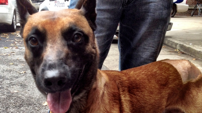 K-9 to Attend Partner's Funeral