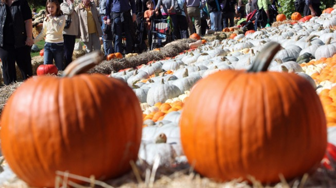 Celebrate the Great Pumpkin at the Institute