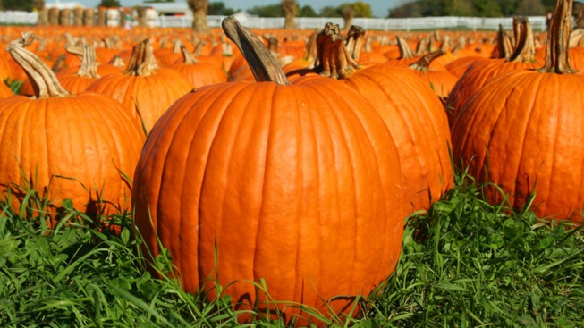 Launch Your Pumpkins This Weekend