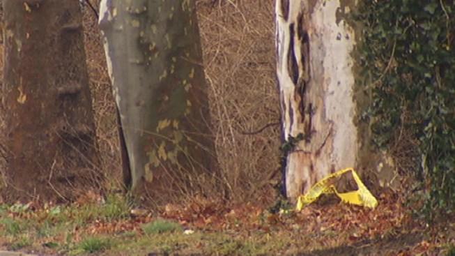 1 Dead, 1 Injured in Roosevelt Blvd. Crash