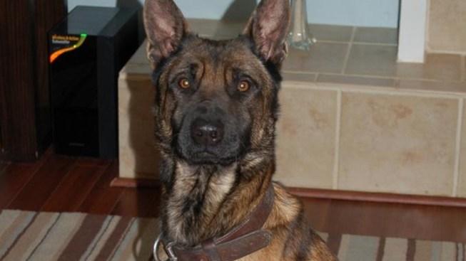 K-9 Officer's Dog Stolen