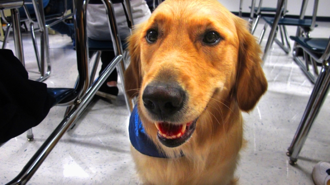 Training Dogs to Sniff Out Disease