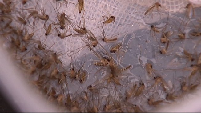 West Nile Virus Shows Up in Delaware
