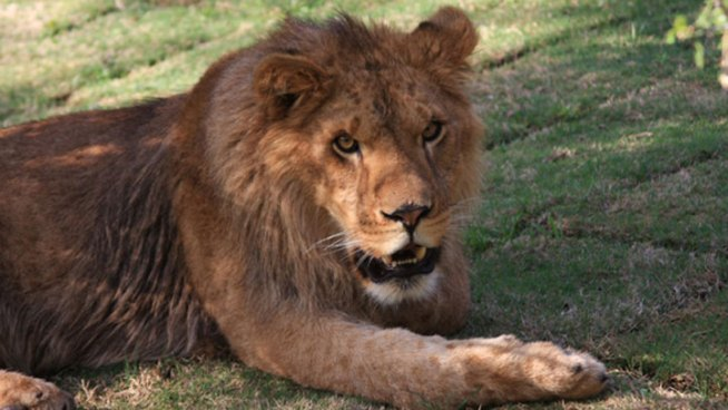 A 24-year-old volunteer intern killed by a lion at a Central Valley sanctuary died