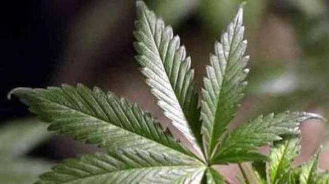 Proposal Calls for a Fine, Not Arrest for Pot