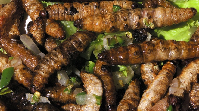 Maggots Found In Prison Potatoes Nbc 10 Philadelphia