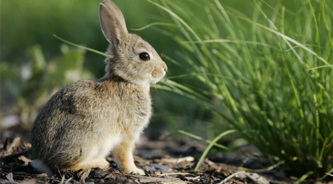 Denver Airport Parking Lot Invaded by Rabbits