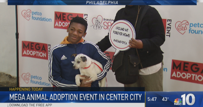 Mega Animal Adoption Event in Philadelphia