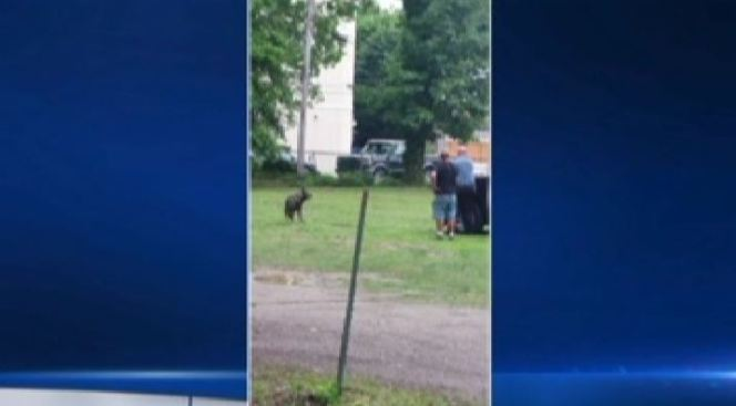 Police Officer Shoots Dog at Close Range